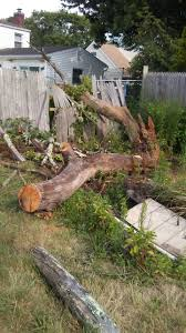 tree removal average cost estimate nassau county tree removal