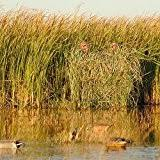 Avery Blind Amazon Com Avery Outdoors Killerweed Boat Blind Kit All Terrain
