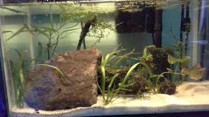 Aquascaping Shop Aquascaping The Art Of The Underwater Garden 7 Steps