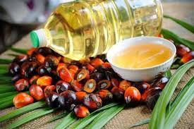 Minyak Kelapa Sawit Terkini tingkatkan usaha perluas pasaran minyak sawit mynewshub
