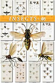 insects 46 collection of 90 vintage illustrations hymenoptera bees