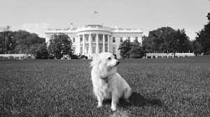 33 photos of the presidents and their pets Pets