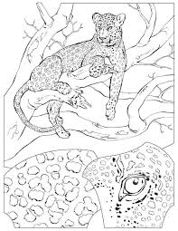 realistic animal coloring pages 130 best coloring pages images on pinterest drawings coloring
