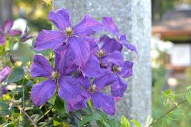 flowers international beautiful flowers all throughout the garden picture of