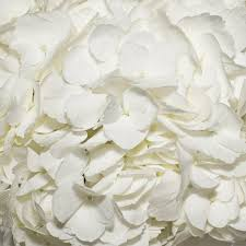 white hydrangeas white hydrangeas ebloomsdirect