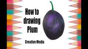 lychee fruit drawing how to draw plum draw fruits youtube