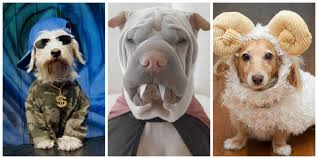 dog halloween costumes images 53 funny dog halloween costumes cute ideas for pet costumes