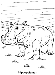 sport life planet earth coloring book awesome animals 95 pics