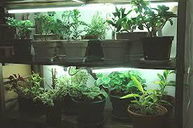 Indoor Herb Garden Light Sage Gardener Setting Up Indoor Grow Lights