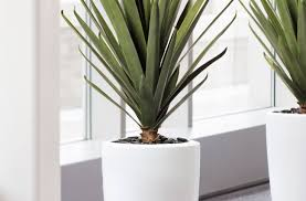 plant house with brown tall plant decorations modern indoor