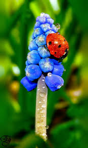 Tiny Red Bugs On Patio by 337 Best Ladybugs Images On Pinterest Lady Bugs Dragonflies And
