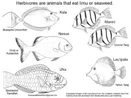 maui ocean bloggers herbivore and khfma coloring page available