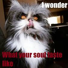 Evil Cat Meme - post 42015 justpost virtually entertaining