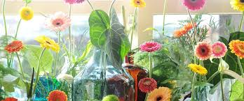Flowers Of The Month Gerbera Care Tips Chrysal