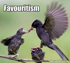 Funny Bird Memes - time to have a laugh again