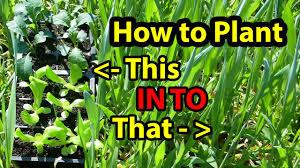 flower gardening 101 true no till gardening growing building soil for