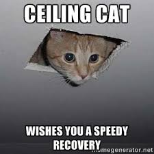 Speedy Meme - get well wishes this ceiling cat wishes you a speedy recovery