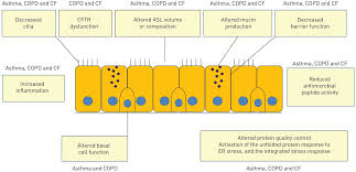the innate immune function of airway epithelial cells in
