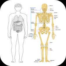 Human Anatomy And Physiology Review Human Anatomy And Physiology Android Apps On Google Play