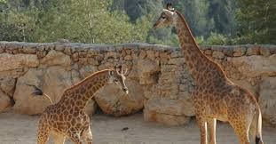 Tisch Family Zoological Gardens - biblical zoo the tisch family zoological gardens israel