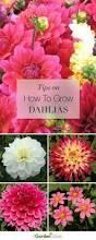 Flower Ideas 25 Best Flower Beds Ideas On Pinterest Front Flower Beds Front
