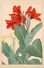 Japanese Flower Artwork - 221 best art japanese fauna u0026 flora images on pinterest