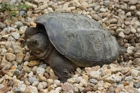 backyard wildlife more turtle stuff tumblehome learning