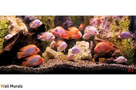 mural aquarium with fishes wall mural aquarium with fishes