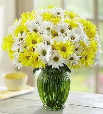 Flowers Com Yellow U0026 White Daisy Bouquet 1800flowers Com 144758