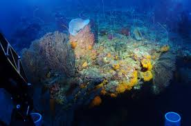exploring deep reef ecosystems in a submersible the deep reef