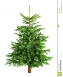 Decorate Christmas Tree Naturally by Decorate Christmas Tree Without Ornaments Christmas Lights
