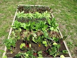 Make A Vegetable Garden by Charming Idea Garden Veggies Plain Ideas Make A Vegetable Garden
