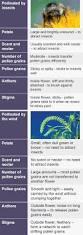 bbc bitesize ks3 biology plant reproduction revision 2