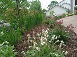 california native plant garden design ecoscapes sustainable landscaping landscape design build