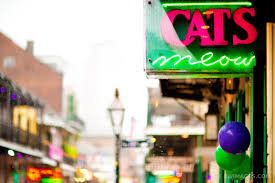 New Orleans Wall Decor Photo Print Of Rainy Day Cats Meow French Quarter New Orleans