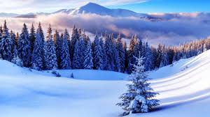 wallpaper pine trees forest winter mountains 4k nature 5257