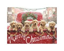 dog christmas cards dog christmas cards kritters in the mailbox animal items