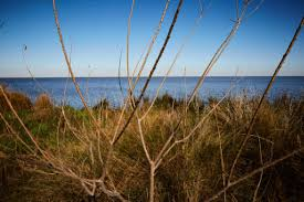 native plants of louisiana can louisiana u0027s tribes restore their traditional diets as waters rise