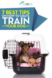 crate training 7 tips for crate training your dog and how to do it right