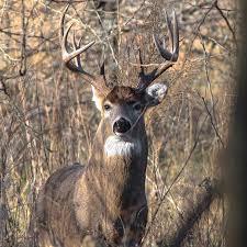 Kansas wild animals images Best 25 kansas deer hunting ideas bow hunting jpg