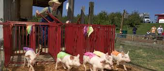 millstadt family fun farm reopens fall 2017 u2014 eckert u0027s family