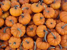 7 activities in and around boston to celebrate autumn