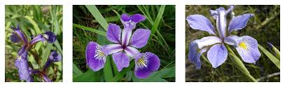 Iris by Tf Estimator Quickstart Tensorflow