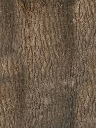 texture tree bark 1 bark lugher texture library