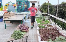 how urban gardening is growing because of these organic farming