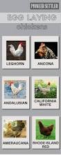 181 best chicken breeds images on pinterest chicken breeds