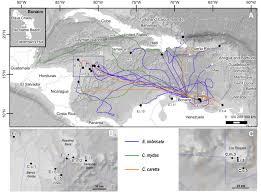 Bonaire Map New Publication Shows Dutch Caribbean Turtles Migrate Into Risky