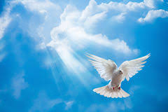 dove in the air with wings wide open stock photo image 39829246