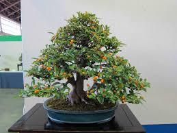 peter tea peter tea bonsai page 46