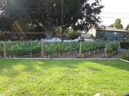 mid may growth the frontyard vineyard